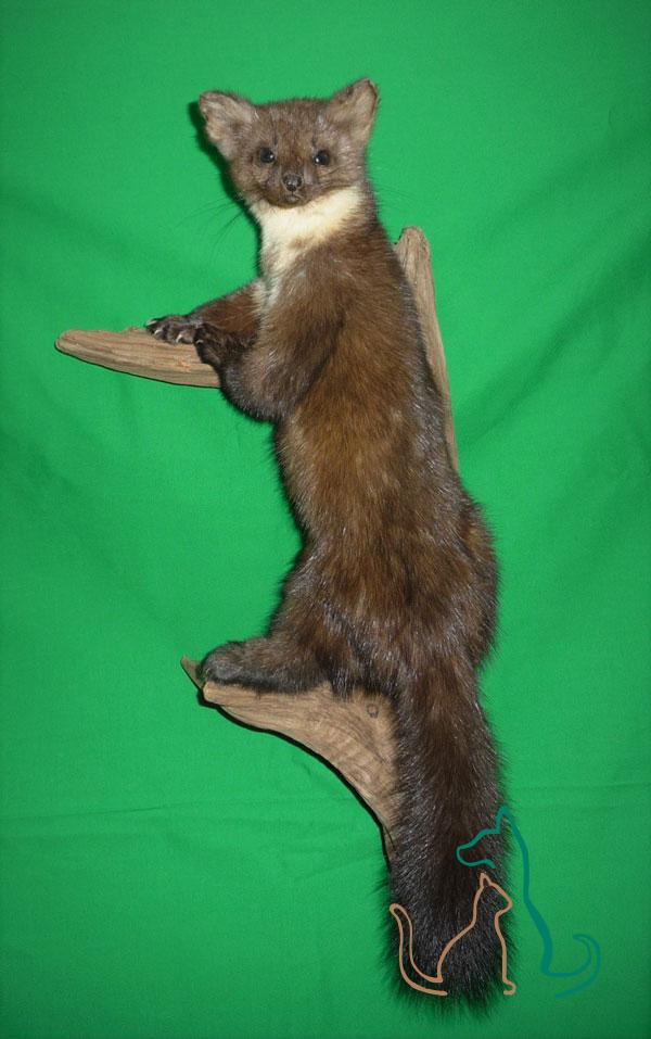 freeze dried marten