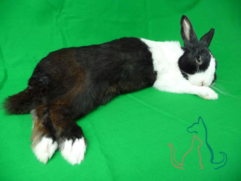 freeze dried pet rabbit